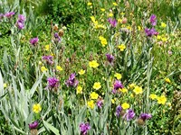 alpine meadows flowers wildlife